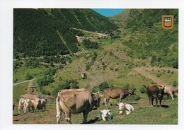Espagne: Os De Civis, Vista General, Vaches (18-1094) - Espagne