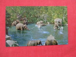 Disneyland --Elephant Bathing Pool    Ref 2934 - Disneyland