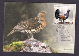 ESTONIA 2018  MAXIMUM CARD Western Capercaillie (Tetrao Urogallus) - Gallináceos & Faisanes
