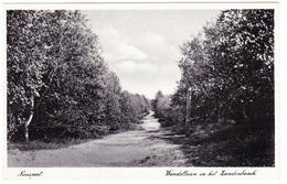Nunspeet - Wandellaan In Het Zandenbosch - 1937 - Nunspeet