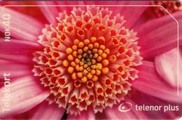 TARJETA TELEFONICA DE NORUEGA. N-240 (102) FLORA - Noruega