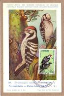 ANDORRE - CARTE MAXIMUM - OISEAUX - MUSEE ROYAL D'HISTOIRE NATURELLE DE BELGIQUE - 59 - PIC EPEICHETTE - 1973 - Climbing Birds