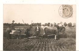 Lievin - Fere En Tardenois -  Carte Photo  - Scenes Champetres - La Recolte Du Blé  -  Beau Plan -  RARE - CPA  ° - Lievin