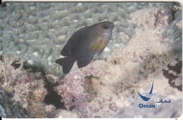 OMAN(chip) - Domino, Threespot Dacyllus, Chip GEM3.1, 11/03, Used - Oman