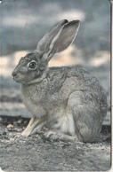 OMAN(chip) - Animal, Wild Rabbit, Chip GEM3.3, 05/02, Used - Oman