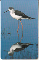 OMAN(chip) - Bird, Black-winged Stilt, Chip GEM3.3, 05/02, Used - Oman