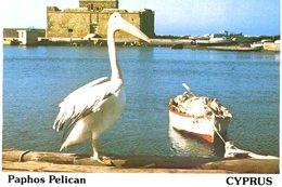 Chypre - Cyprus - Paphos Pelican - Chypre