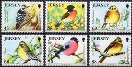 Jersey 2012 Yvertn° 1748-1753  *** MNH Cote 14 Euro Faune Oiseaux Vogels Birds - Jersey