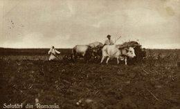 SALUTARI DIN ROMANIA ROMANIA PORT NATIONAL     RUMANIA // ROMANIA. - Rumania