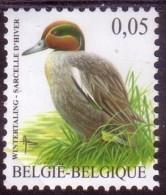 BE2007- BUZIN N°  3623 XX Sarcelle D'Hiver - 1985-.. Oiseaux (Buzin)