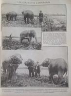 Guerre  14-18 LAVILLEDIEU  Les éléphants Laboureurs    Cirque Pinder - Alte Papiere