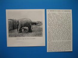 (1936) La Naissance En France D'un éléphanteau Du Cirque Amar, Dans Un Wagon De La Cie Du Nord, Entre Douai Et Aniche - Alte Papiere