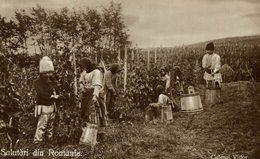 Culesul Viilor - Rumänische Bauern-Weinernte - Grape Harvest, Wine Industry      RUMANIA // ROMANIA. - Rumania