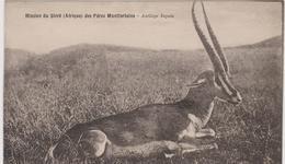 Cpa A5 Mission Du Shiré Des Pères Montfortains -antilope Ingala-belle Carte - Postcards