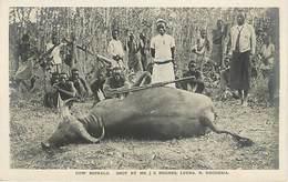Zambie Rhodesia - Cow Buffalo Chasse Au Buffle - Zambie