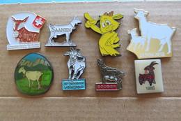 Lot De 8 Pin's, Chevre, Chévre, Ziegen - Animals