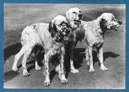 CANI DOG 1953 - Hunde