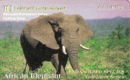 *U.S.A. - ELEFANTE* - Scheda Usata - Jungle