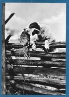 CANI DOG 1955 - Hunde