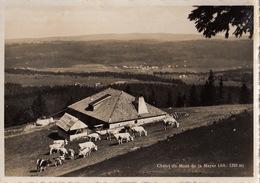 Chalet Du Mont De La Mayaz, Alt. 1319 M. Alpage Avec Bétail.  Ecrite 1939 - VD Vaud