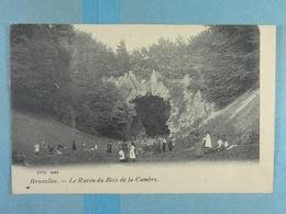 Bruxelles Le Ravin Du Bois De La Cambre (DVD 9683) - Forêts, Parcs, Jardins