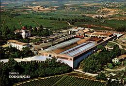 ESPAGNE - Cavas Codorniu - Sant Sadurni - Espagne