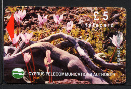 CHYPRE CYPRUS, FLEURS DE FORET / RACINES , Telecard £5 / Telephone Card /  Utilisée / Used. Rcypfleurs - Blumen