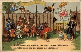 CHATS - Carte Dessinée - Chats