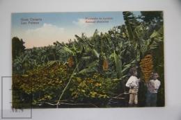 Antique Postcard Canary Islands - Gran Canaria Las Palmas - Bananas Plantation - Gran Canaria