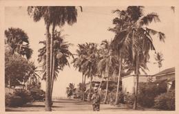 COTONOU    DAHOMEY       UNE ALLEE BORDEE DE COCOTIERS - Benin