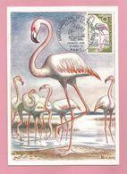 Frankreich  1970  Mi.Nr. 1704 ,  EUROPA CEPT Sympathie Mitläufer - Maximum Card - Premier Jour Paris 21 Mars 70 - Europa-CEPT
