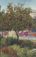 Agriculture - Oranger Fleurs - Cultures