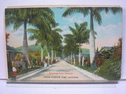 ANTILLES - GREETINGS FROM JAMAICA - PALM AVENUE - PORT ANTONIO - Jamaïque