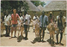 Afrique : Centre De  Formation De Foyers Cathéchistes , FADA - N ' Gourma , Frère  Gérard , Ane - Postcards