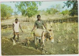 Afrique : Centre De  Formation De Foyers Cathéchistes , FADA - N ' Gourma ,  , Ane , Charrue - Postcards