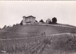 SAINT-ALBAN-LEYSSE .Vignoble Du Château De Monterminod - Francia