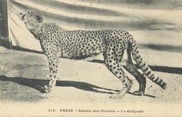 Postal Francia. 315. Paris. Jardin Des Plates. Le Guepard. Circulada Y Matasellada. Ref. 7-3ay117 - Francia