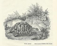 GRAVURE De 1837... TORTUE GRECQUE - Stampe & Incisioni