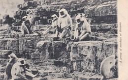 GROUP OF MONKEYS AT BENARES - Monkeys