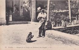 BLADA -GORGES DE LA CHAFFA AU RUISSEAU DES SINGES - Singes