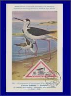 Hongrie, Carte Maximum, Yvert 123 PA, Echasse Blanche - Maximum Cards & Covers