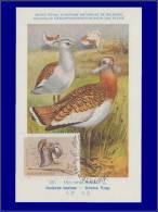 Hongrie, Carte Maximum, Yvert 1697, Oiseau - Maximum Cards & Covers
