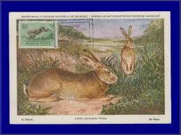 Hongrie, Carte Maximum, Yvert 138 PA, Lièvre - Maximum Cards & Covers