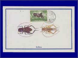 Hongrie, Carte Maximum, Yvert 166 PA, Grillon - Maximum Cards & Covers