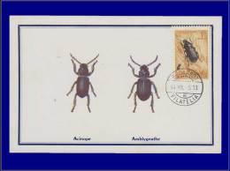 Hongrie, Carte Maximum, Yvert 165 PA, Insecte - Maximum Cards & Covers