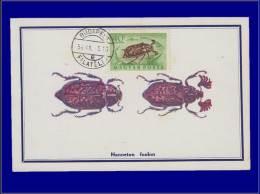 Hongrie, Carte Maximum, Yvert 161 PA, Insecte - Maximum Cards & Covers