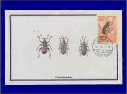 Hongrie, Carte Maximum, Yvert 160 PA, Insecte - Maximum Cards & Covers