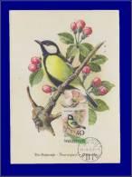 Hongrie, Carte Maximum, Yvert 1479, Oiseau - Maximum Cards & Covers