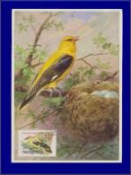 Hongrie, Carte Maximum, Yvert 1482, Oiseau - Maximum Cards & Covers