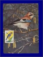 Hongrie, Carte Maximum, Yvert 1481, Oiseau - Maximum Cards & Covers